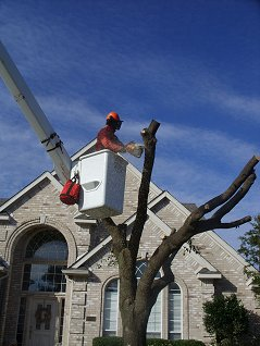 Complete Tree Services Inc.